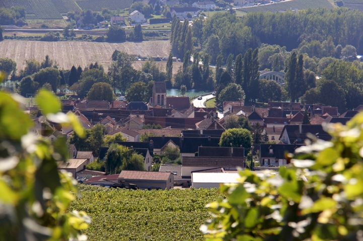 IMG_3215 reuil (2)